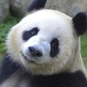 熊猫投资笔记用户